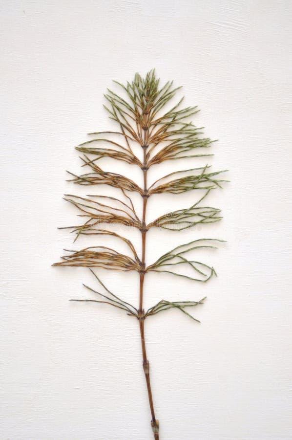Wysuszona zielona roślina zdjęcie stock
