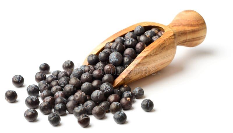 Wysuszone jałowcowe jagody w oliwnej drewnianej miarce zdjęcie royalty free