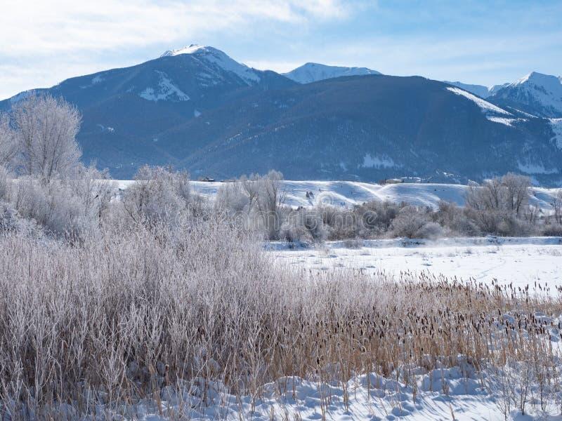 Wysuszone trawy i ?nie?ny Montains raj dolina w Montana fotografia stock