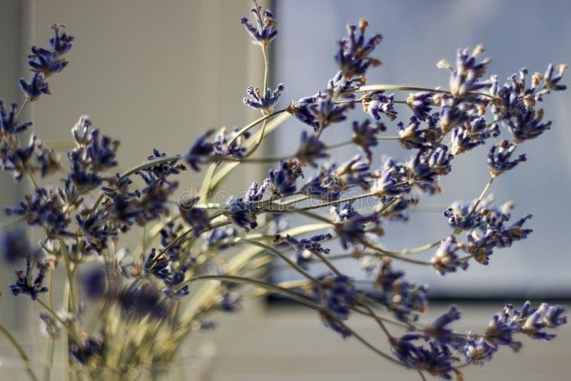 Wysuszone wiązki lawenda - leczniczy ziele tło, makro-, blured kwiaty, zdjęcia stock