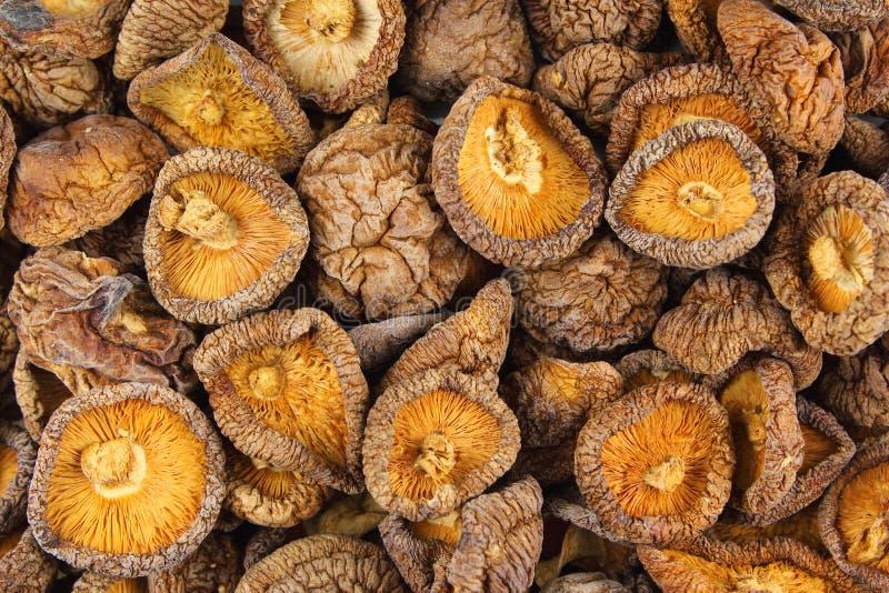 Wysuszonego shiitake pieczarek zbliżenia tła karmowa tekstura obraz stock