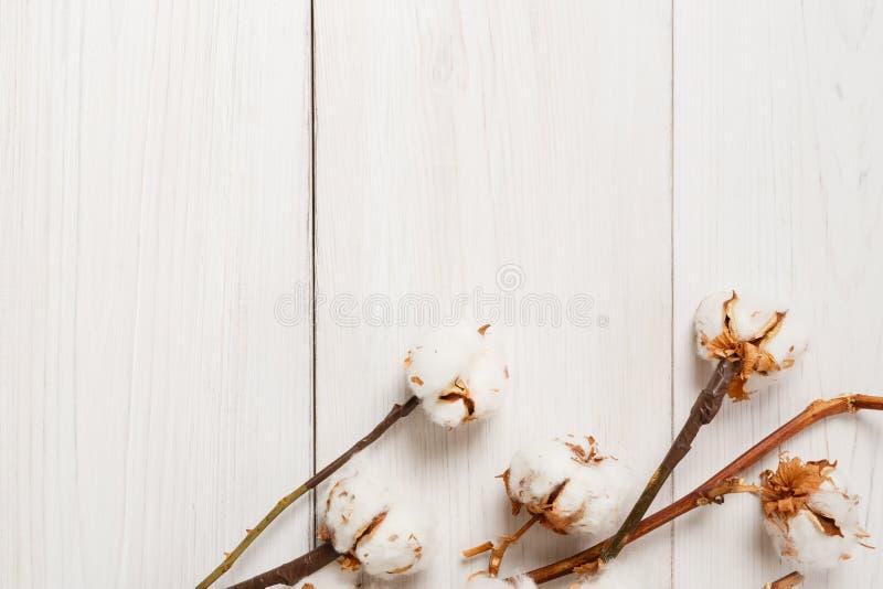 Wysuszony bawełniany kwiatu tło na białym drewnie, Odgórny widok obraz royalty free