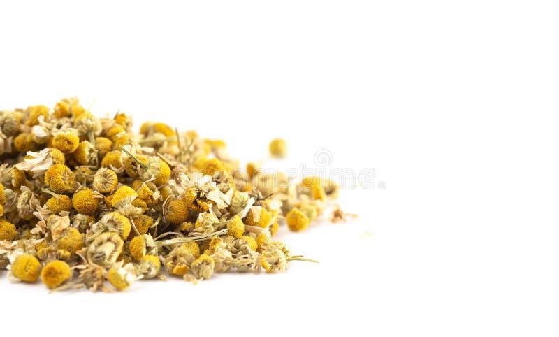 Wysuszony chamomile kwitnie na bia?ym tle fotografia stock