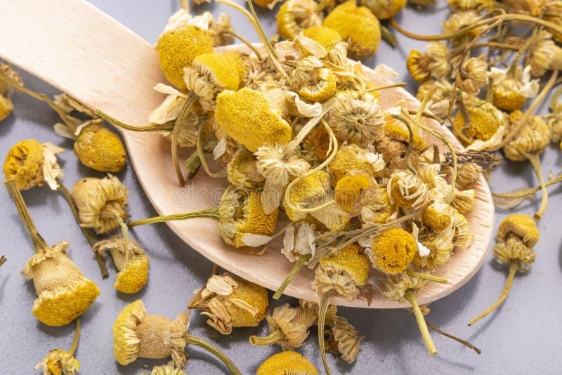 Wysuszony chamomile kwitnie w drewnianej łyżce na szarym talerzu obraz royalty free