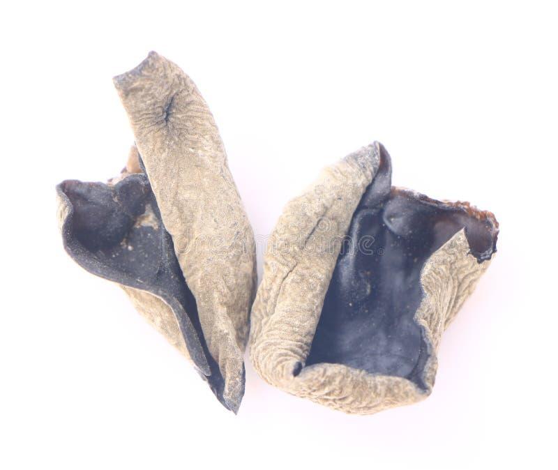 Wysuszony czarny grzyb lub Auricularia polytricha obrazy stock