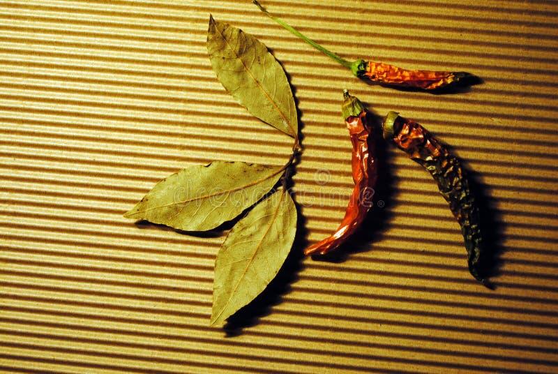 Wysuszony czerwonego chili pieprz i podpalany liść na pasiastej rowkowatej papierowej teksturze zdjęcia stock