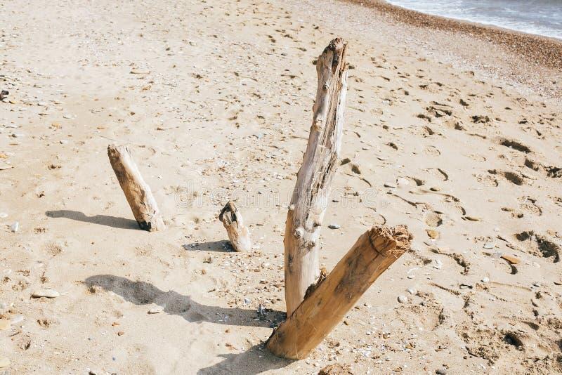Wysuszony drewno rozgałęzia się na piaskowatej plaży przy morzem Piękny wizerunek stare wysuszone drewniane gałąź na tle piasek i zdjęcia stock