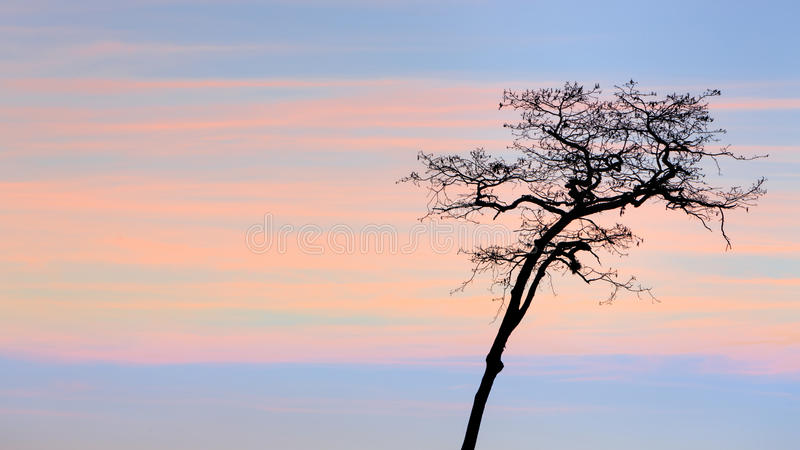 Wysuszony i wysoki sylwetki drzewo zdjęcia royalty free