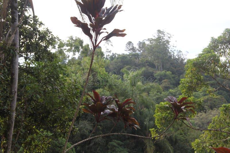 Wysuszony liść spadać nad zielonymi liśćmi fotografia royalty free