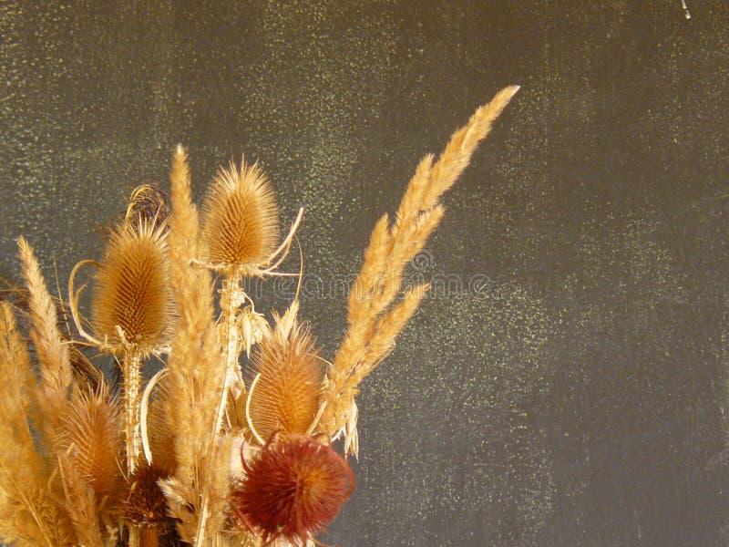 Wysuszony - out rośliny fotografia royalty free