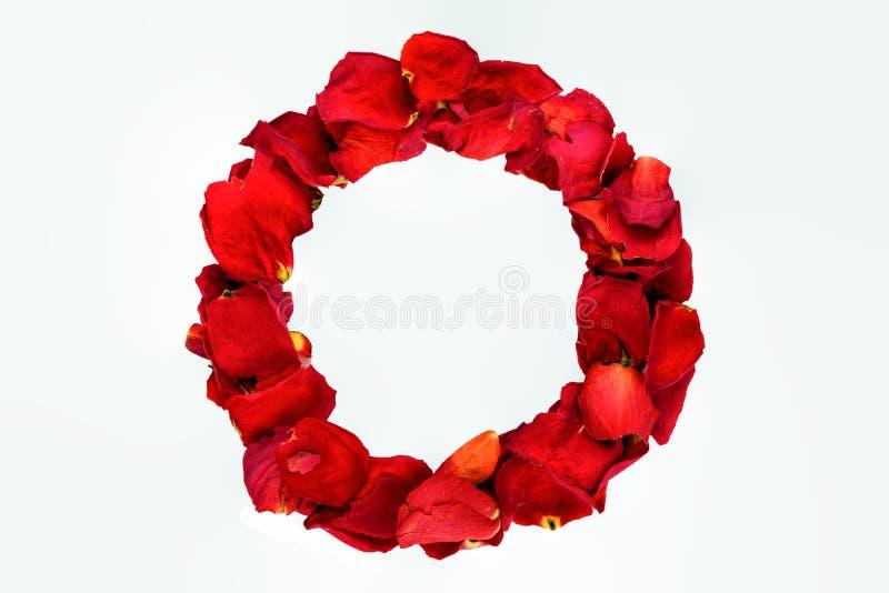 Wysuszony różany płatka pierścionek fotografia royalty free