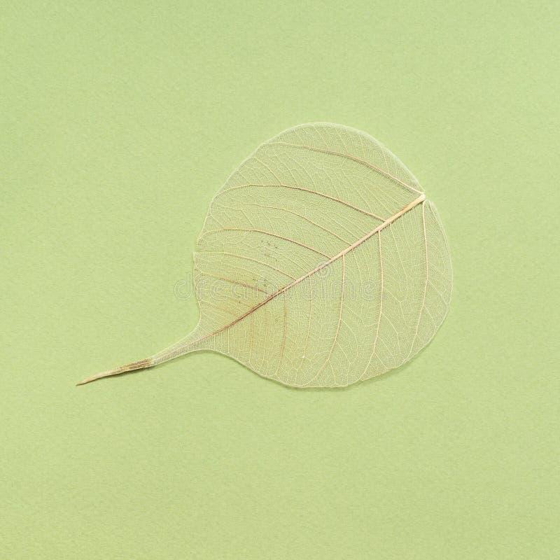 wysuszony spadać liść na zielonej oliwki tle zdjęcia royalty free