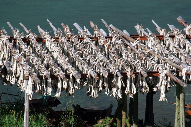wysuszony sztokfisz fotografia stock