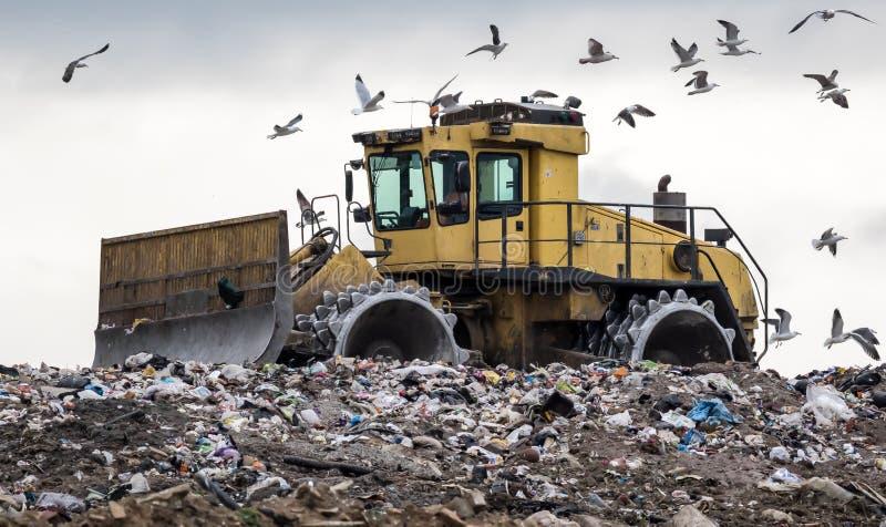 Wysypisko buldożer wyśmiewający ptakami fotografia stock