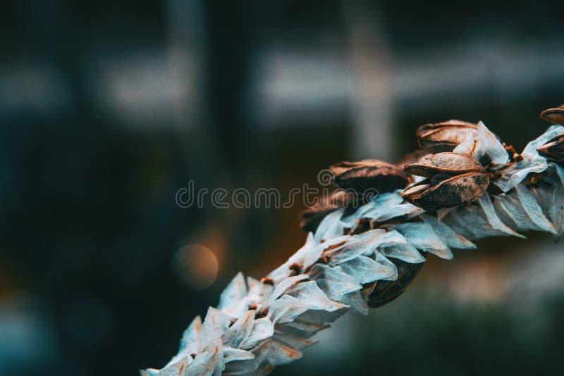 Wyszczególnia biel i suszy kwiatu obraz stock