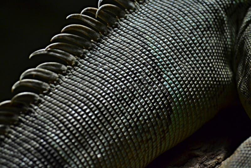 Wyszczególnia o jaszczurki skóra, unikalna tekstura obraz royalty free