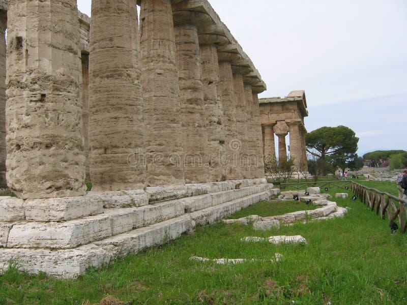 Wyszczególnia Paestum w wiośnie Włochy i profil starożytny grek świątynie fotografia stock