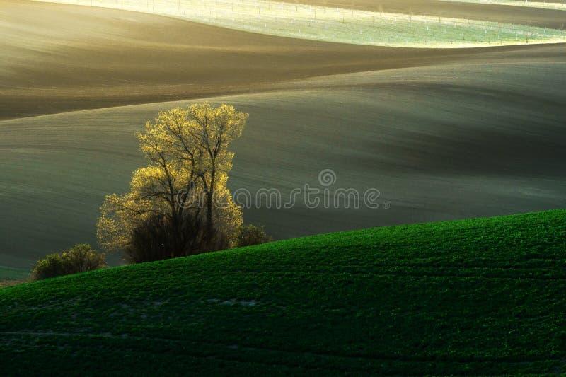 Wyszczególnia scenerię przy Południowym Morawskim polem podczas wiosny, republika czech fotografia royalty free
