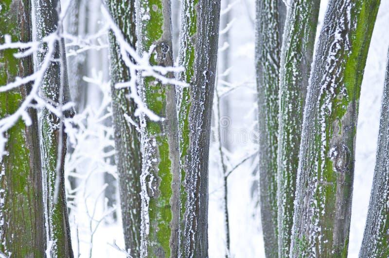 wyszczególnia zimy lasów zdjęcia stock