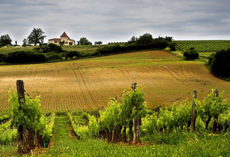 wytwórnia win obrazy stock