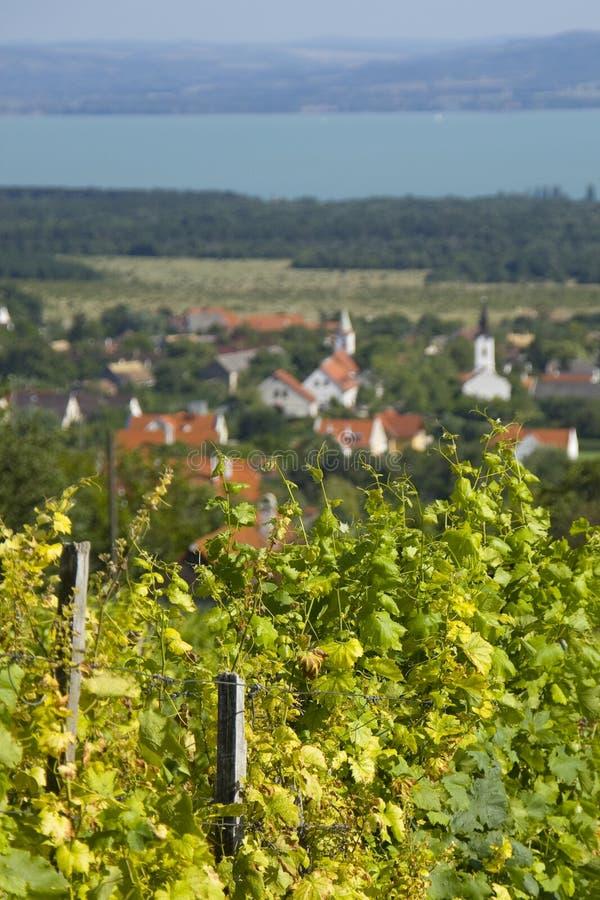 Wytwórnia win obok wioski zdjęcia royalty free