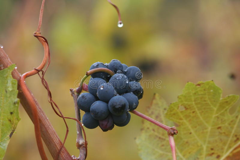 Wytwórnia win w spadku zdjęcia royalty free