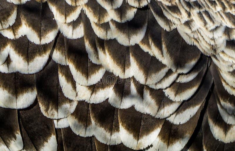 Wzór ruppells sęp upierza w makro- zbliżeniu, przyrody tło, krytycznie zagrażający ptasi specie obraz royalty free