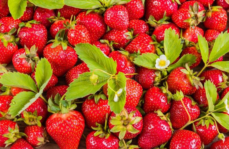 Wzór świeża czerwona truskawka z liśćmi fotografia stock