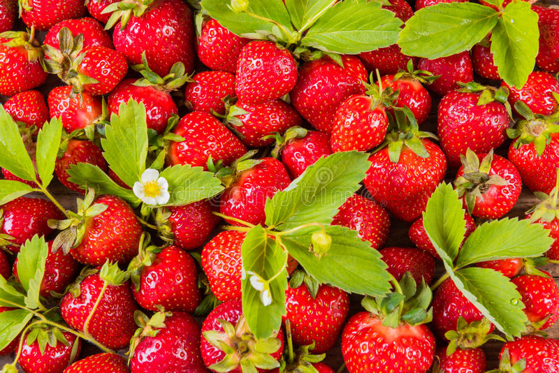 Wzór świeża czerwona truskawka z liśćmi obraz royalty free