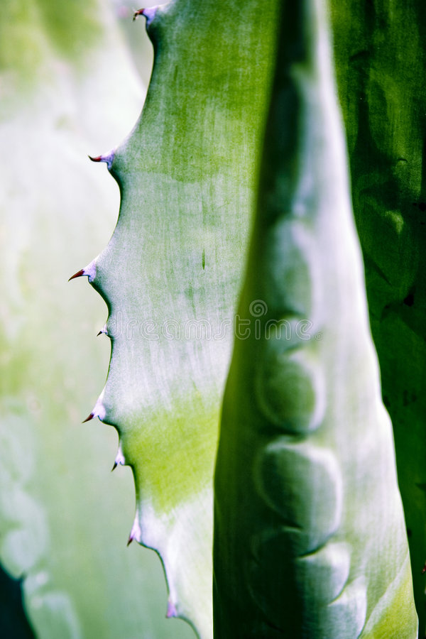 wzór abstrakcyjne liści zdjęcie stock