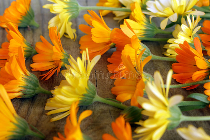 Wzór calendula kwitnie na stole obrazy stock