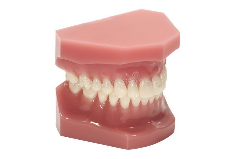 wzór dentystycznego fotografia royalty free