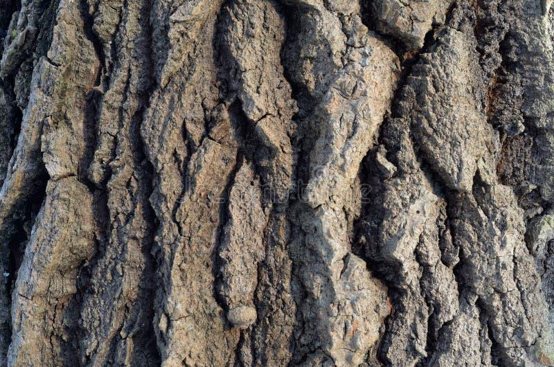 Wzór drzewna barkentyna Tło Piękna tekstura obrazy stock