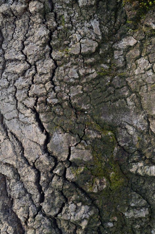 Wzór drzewna barkentyna Tło Piękna tekstura zdjęcie stock
