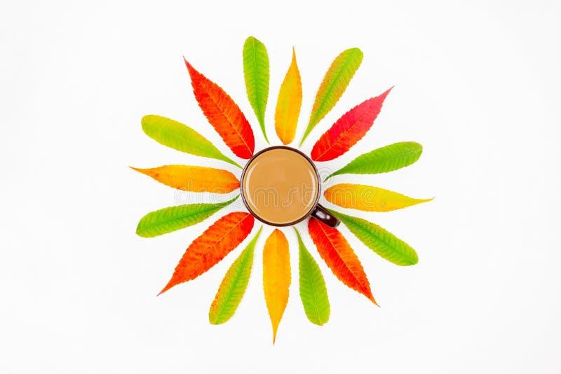 Wzór kolorowi jesień liście i filiżanka na białym tle gorący kakao odgórny widok mieszkanie lub kawa z mlekiem w centrum, zdjęcia royalty free