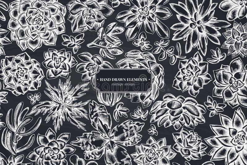 Wzór kwiatowy z kredową soczystką echeveria, sukulent echeveria, soczysta ilustracja wektor