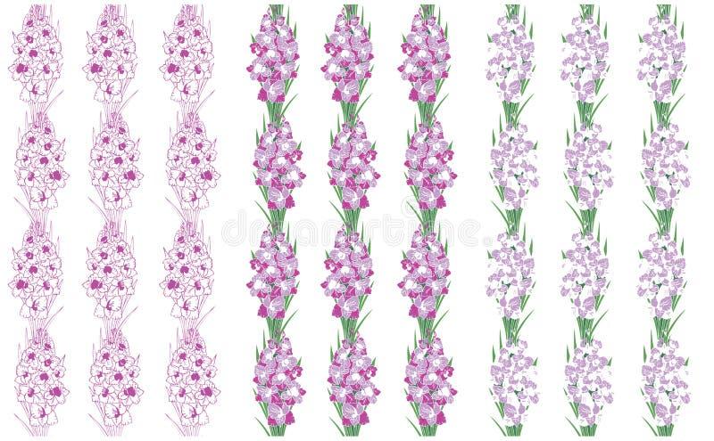 Wzór kwitnie gladiolusa na białym tle ilustracja wektor
