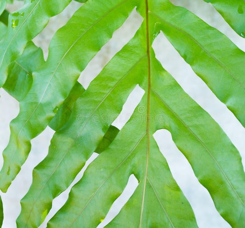 Wzór liście zdjęcia stock