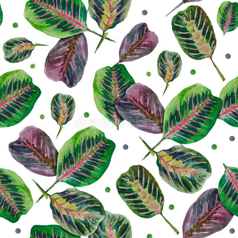 Wzór liście arrowroot aksamitowowie ilustracja wektor