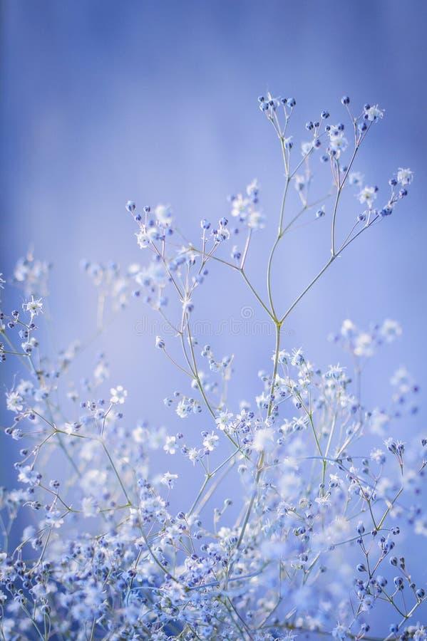 Wzór mali biali kwiaty na Bławym tle Piękny tło zbliżenie, selekcyjna ostrość Pionowo Fotografia fotografia royalty free
