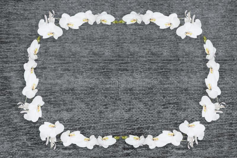 Wzór naturalnych kwiatów białe orchidee na ciemnym drewnianym tle zdjęcie royalty free