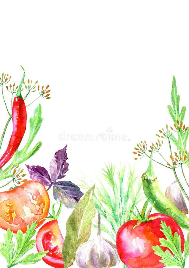 Wzór pikantność i ziele konserwować warzywa ilustracja wektor