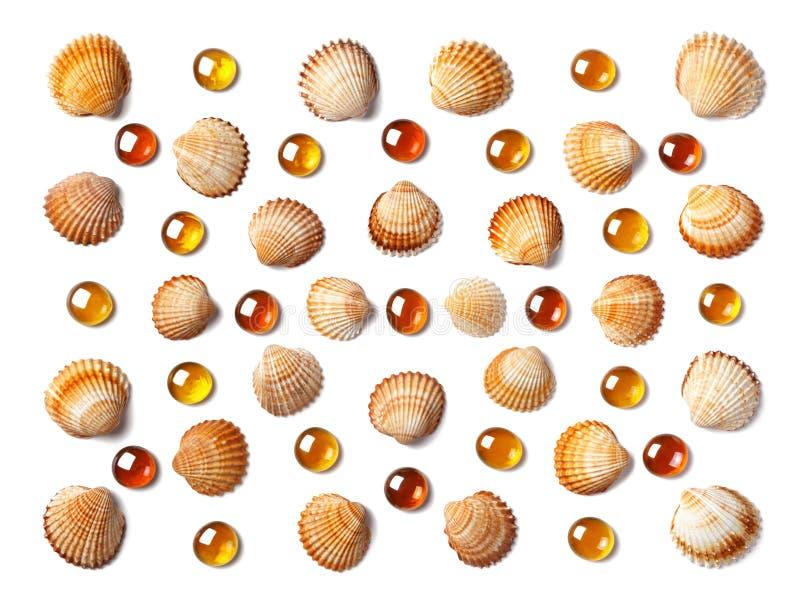 Wzór robić skorupy i pomarańczowi szklani koraliki odizolowywający na białym tle obrazy royalty free