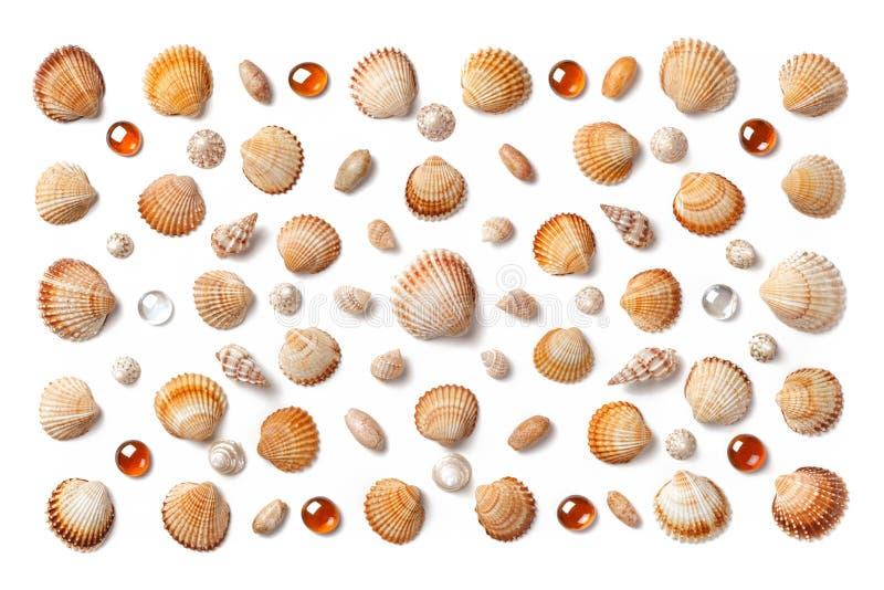 Wzór robić skorupy i pomarańczowi szklani koraliki odizolowywający na bielu obrazy stock