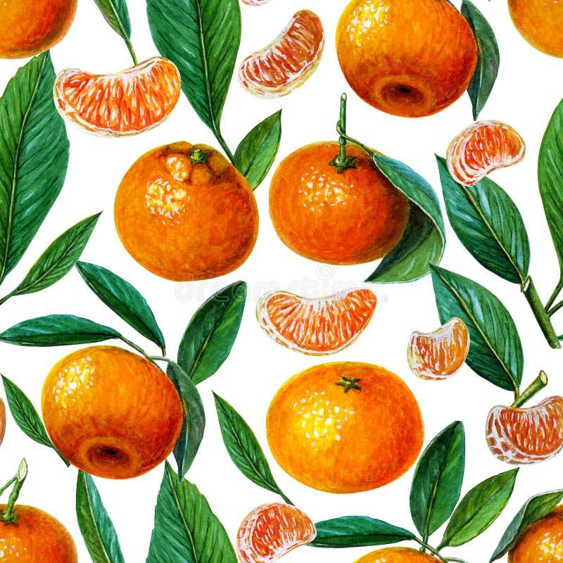 Wzór tangerines, mandarynki lub clementines z liśćmi i plasterkami Cytrusa wz?r na bia?ym tle Pomara?cze royalty ilustracja