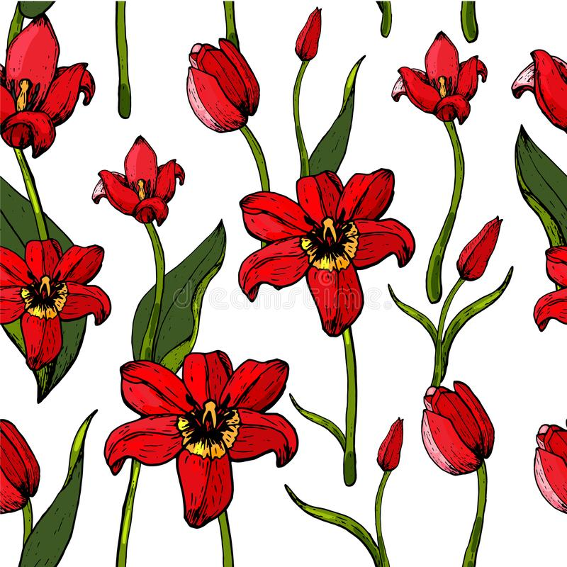 Wzór tulipany obraz royalty free