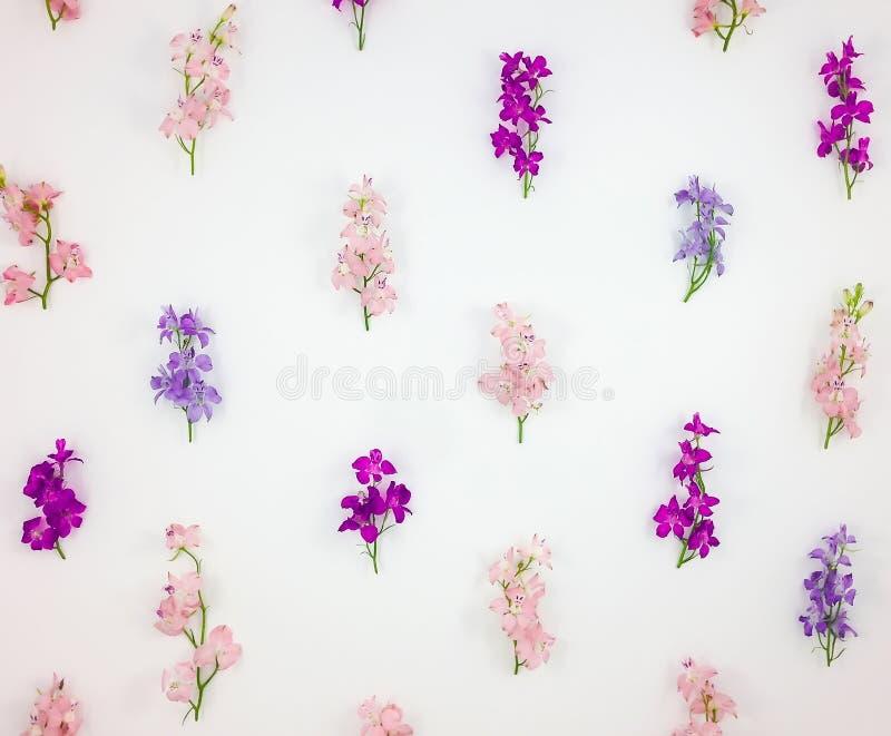 Wzór z kolorowym toadflax kwitnie na białym tle Mieszkanie nieatutowy, odgórny widok zdjęcie royalty free