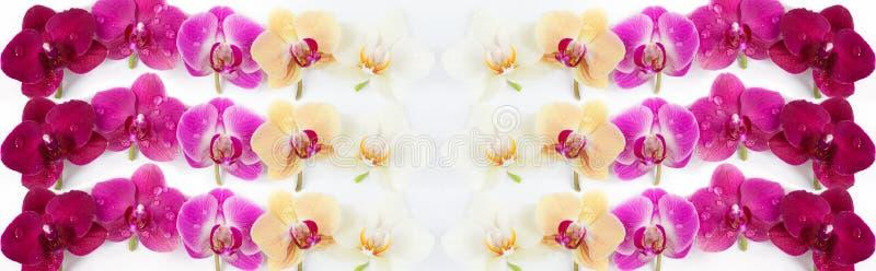 Wzór z orchideami kwitnie na białym tle fotografia royalty free