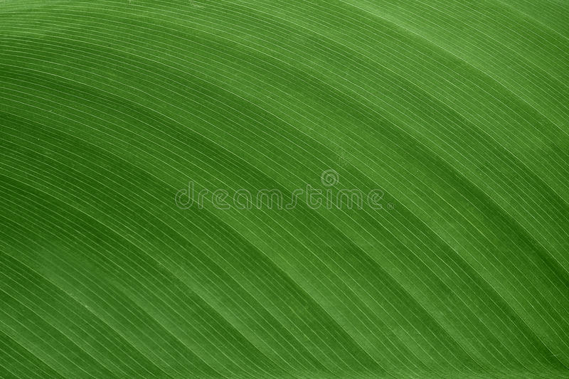 Wzór zielony liść dla tła i tekstura obraz royalty free