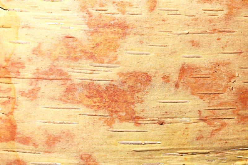 Wz?r brzozy barkentyna z czarnej brzozy lampasami na bia?ej brzozy barkentynie fotografia stock